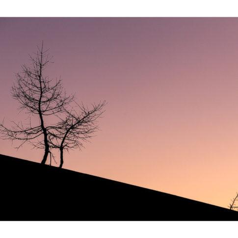 val_fiorentina_alberi_inverno