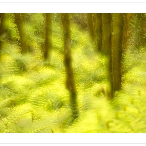 foresta_anaga_laurisilva