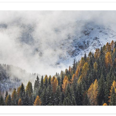 larici_civetta_autunno