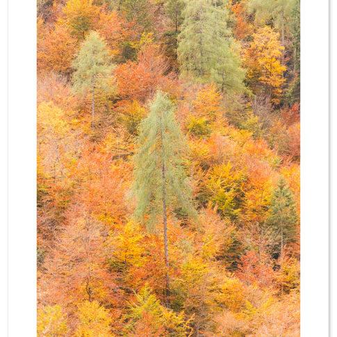 autunno_zoldo