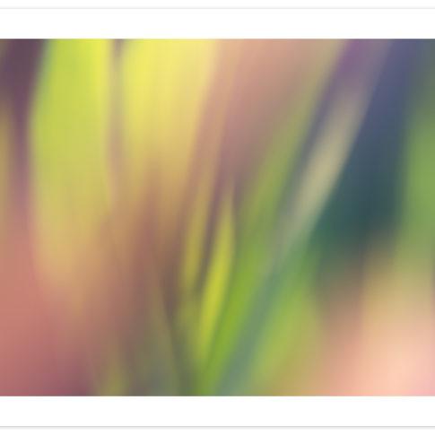 arcobaleno_vegetale