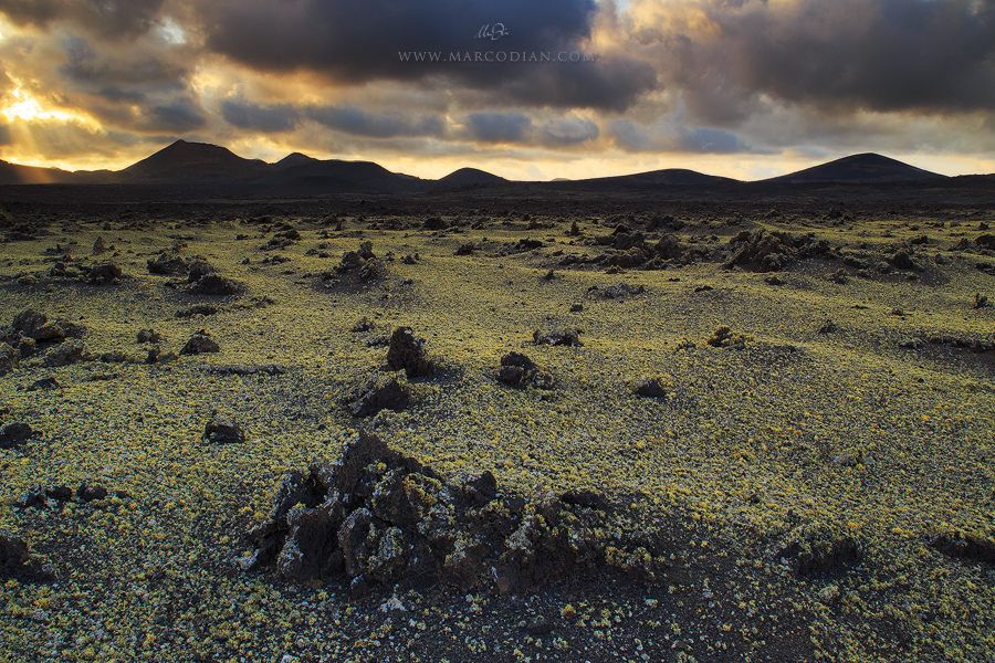 I licheni di Timanfaya