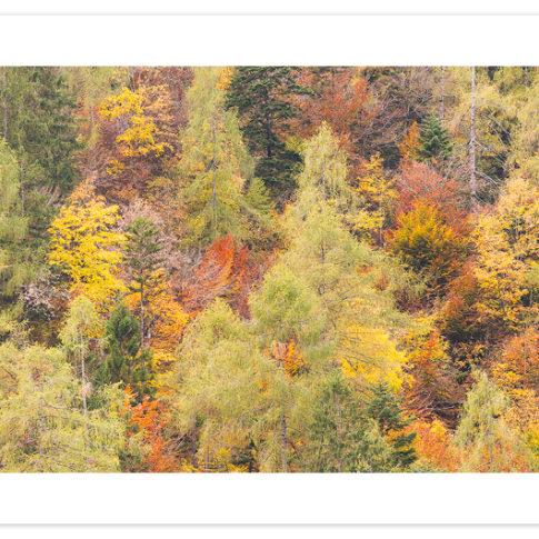 autunno_zoldo_pano