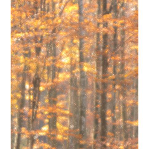 cansiglio_autunno_foresta
