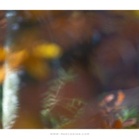 cansiglio_autunno_quadro