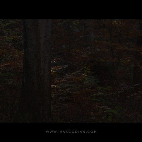 cansiglio_dark_autunno