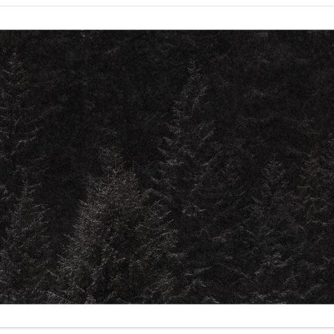 val_di_zoldo_nevicata_alberi_scuro