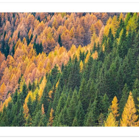 larici_autunno_giau
