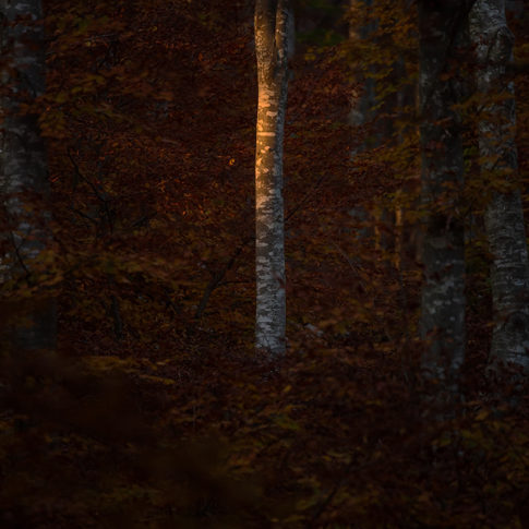 cansiglio_luce_bosco_autunno