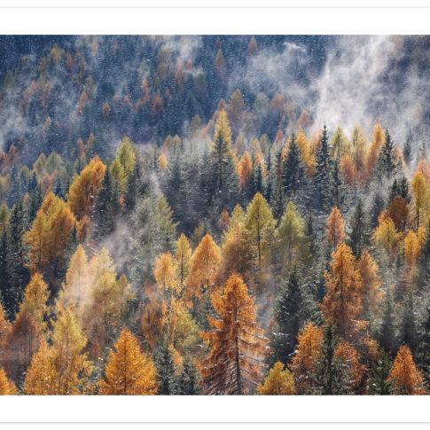 larici_zoldo_alto_autunno