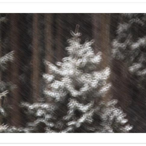 albero_neve_inverno_zoldo