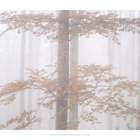 cansiglio_nebbia_autunno_2