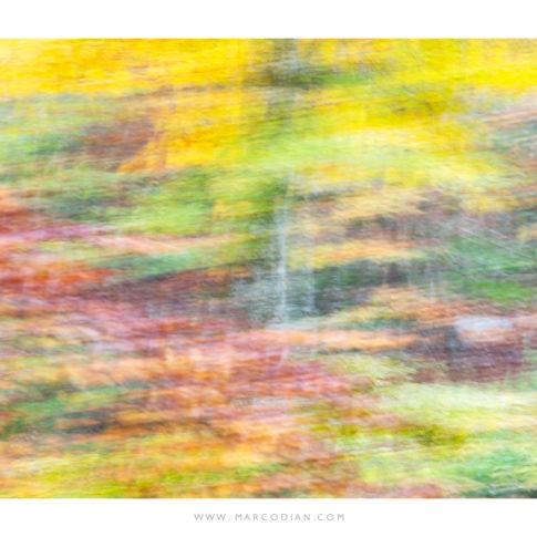 cansiglio_quadro_autunno